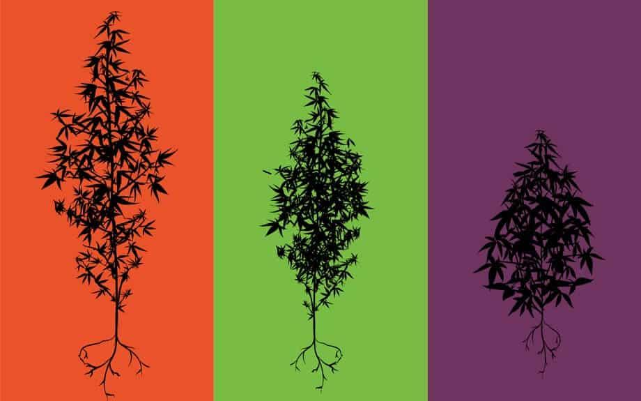 Indica Sativa et Hybride