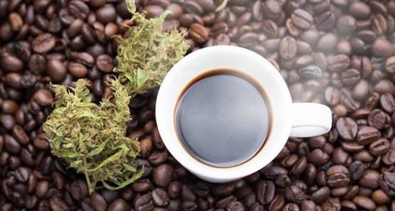 Ένωση καφέ και κάνναβης
