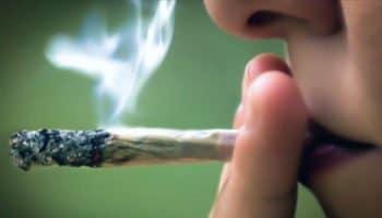 """""""Giống như thuốc lá"""""""