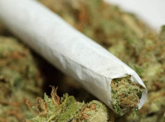 Marijuana-1347608244