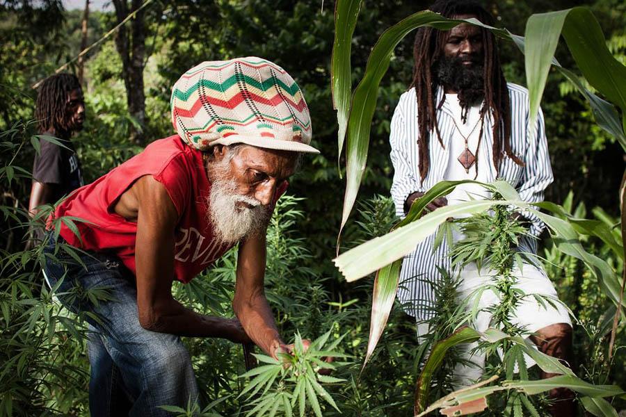 Buendiario-jamaica-despenaliza-marihuana-rastafari-personal-2