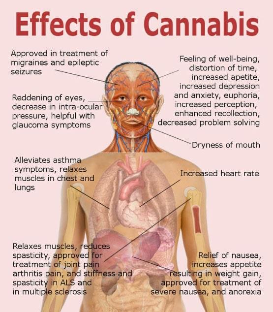 marihuana versus cocaïne, cocaïne, cocaïne-toxiciteit, cocaïnesubstitutiebehandeling, cocaïne-ontwenningsbehandeling, cocaïnebehandeling, cocaïneverslaving, behandeling van cocaïnehonger, behandeling voor cocaïne-intoxicatie, cocaïnebehandeling, natuurlijke behandeling voor cocaïne-terugtrekking, cannabis-cocaïne, cannabis-cocaïne-heroïne ... in toulouse het verkeer was goed gevuld, cocaïne cannabisverslaving, cannabis versus cocaïne, prijs cannabis cocaïne, consumptie cannabis cocaïne