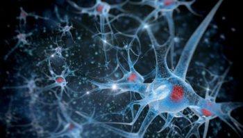 La cannabis provoca la neurogenesi
