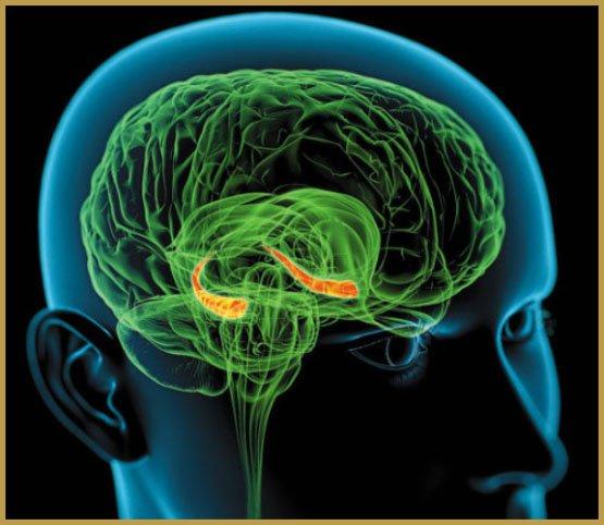Cần sa gây ra sự hình thành thần kinh