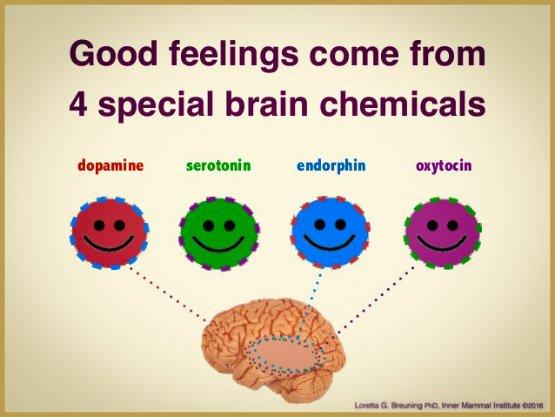 happy-cervello-chimici-serotonina, dopamina-ossitocina-e-endorfine-2-638