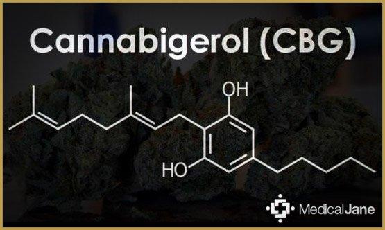 CBG, un nuevo cannabinoide listo para usar