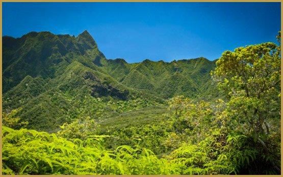 cuidar-cultivos-de-cannabis-in-hawai
