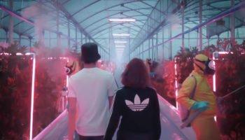 Adidas и его видение будущего каннабиса