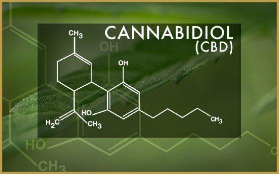 cbd-is-CBD 6