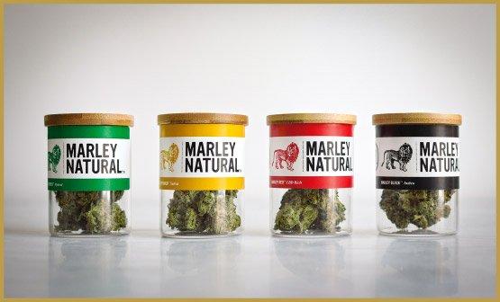 mn_cannabis_image