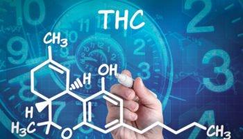 Cuộc sống lâu dài của THC