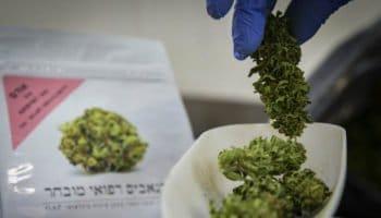 Cần sa y tế của Israel có sẵn trong các hiệu thuốc