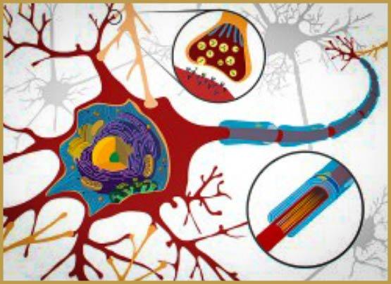 brain, brain damage