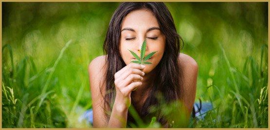 Differences Between CBD Hemp & Marijuana Products