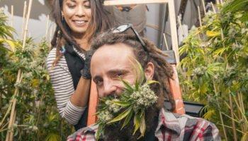 Marijuana à Washington, une entreprise milliardaire