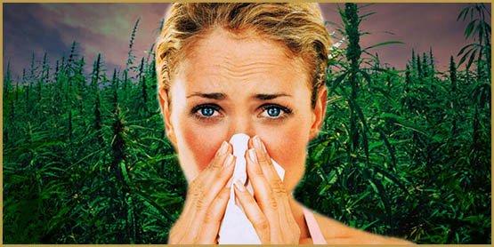 4 façons de reconnaître une herbe moisie