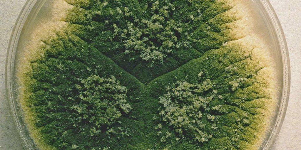 mycotoxines,herbe,de la moisissure dans l'herbe,Comment savoir s'il y a de la moisissure dans l'herbe?,herbe moisie