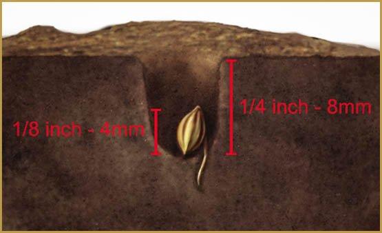 Cách gieo hạt giống của bạn