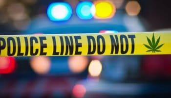Hợp pháp hóa cần sa sẽ làm giảm tội phạm 25%