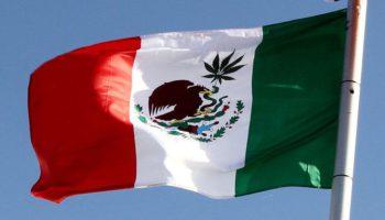 Senat Meksiko memberikan suara pada ganja medis