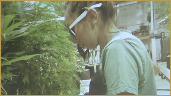 The best cannabis training schools