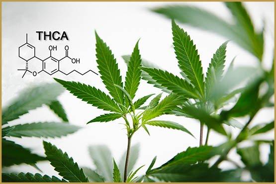 Μια αποκλειστική μέθοδος AXIM για την εξαγωγή της THC