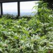 Biologische landbouw: hier zijn goedkope 3-producten om uw planten te upgraden