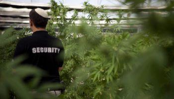 Israele depenalizza la cannabis ricreativa