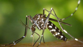 Κάνναβη ενάντια στην ελονοσία