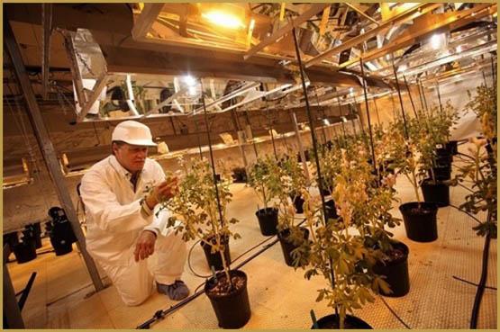 Top 25 des pays pour les amateurs de weed