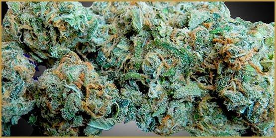 5 souches de cannabis pour le débutant