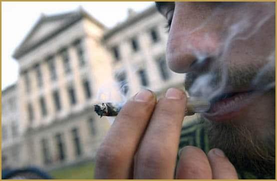 Drug Policy Alliance, cannabis policy