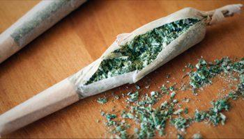 Le shake ou les restes de cannabis