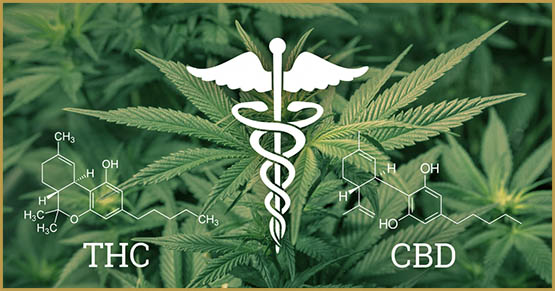 THC, CBD, cannabinoides, cannabinoides principales