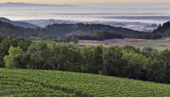 Californiske vinproducenter forbereder sig på marihuana