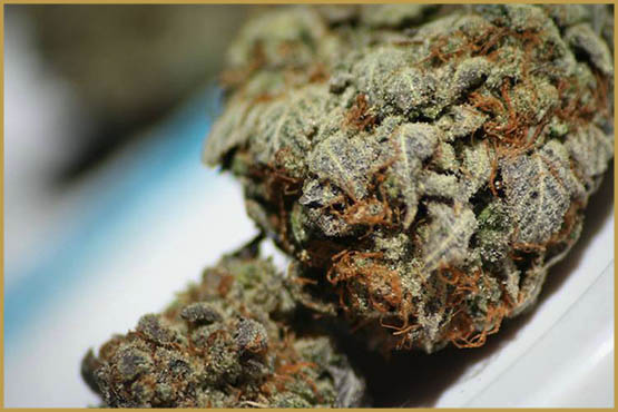 The best strains for video games
