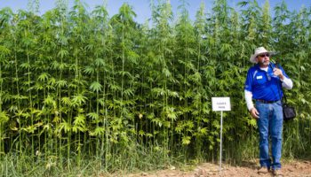 Washington to hemp cultivation without a license