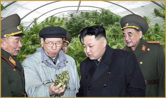 La Corée du Nord cultive du chanvre à des fins militaire