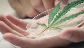 Le syndrome de déficience endocannabinoïde