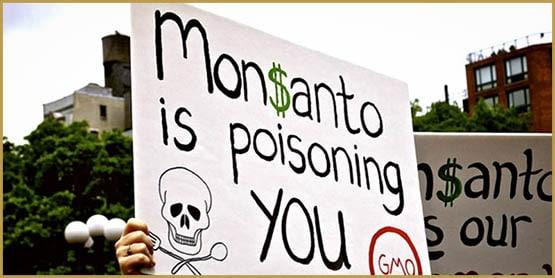GMO, Monsanto, Bayer, Big Cannabis, Monsanto Bayer, Monsanto Scandal, Monsanto Products