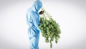 La dose optimale de THC pour ressentir un High
