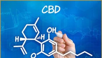 2-AG, the body's cannabinoid