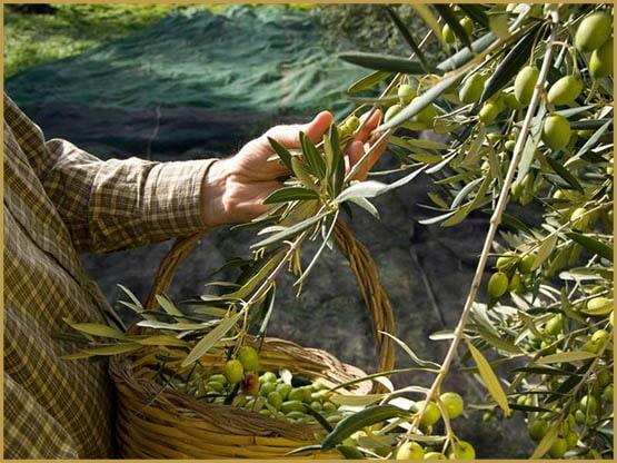 ヨーロッパ、栽培、麻、イタリア、イタリアでの栽培、イタリアの大麻栽培、イタリアの栽培cbd、イタリアの大麻栽培