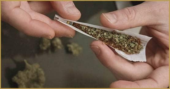 tobacco, cannabis-tobacco comparison, cannabis tobacco, smoking kills, smoking tobacco