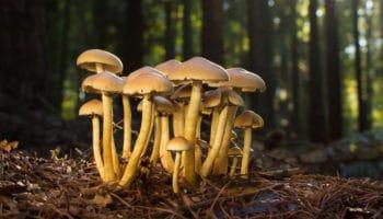 California en camino a legalizar hongos psicodélicos