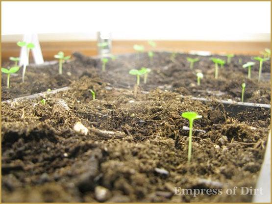 Guida all'identificazione dei semi prima di piantare
