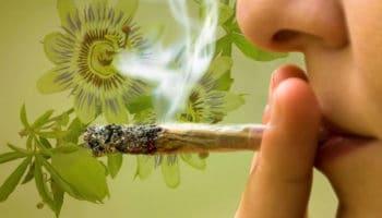 Les herbes médicinales qui se combinent bien avec la fumée