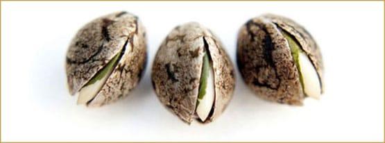 produza suas próprias sementes
