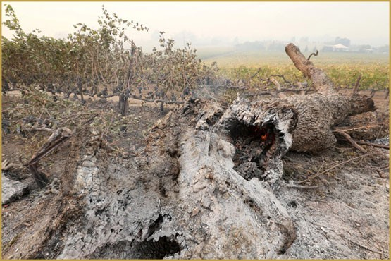 wine, California, America, forest fires