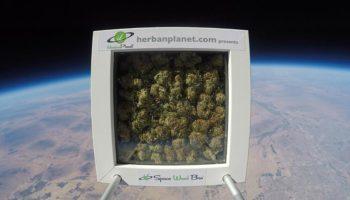 """""""Space Weed Bro"""" le premier bud intergalactique"""